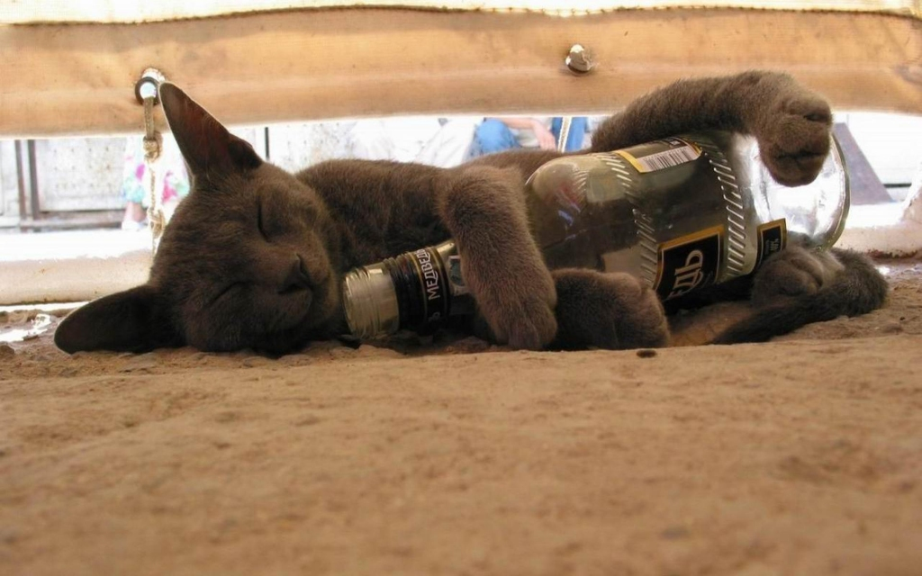 60435-cats-drunk-cat